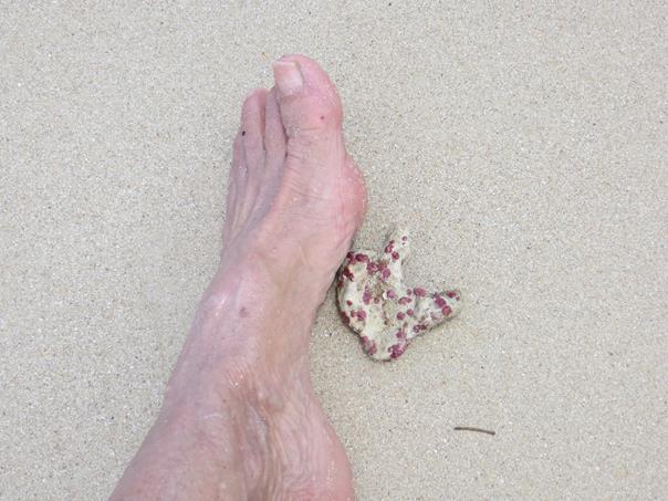 Andar mirando lo que pisamos,en la arena hay restos de coral que...