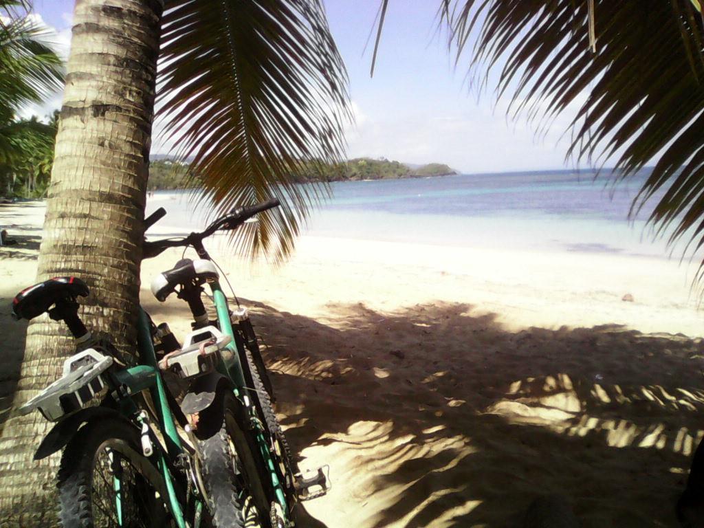 Aparcar las bicicletas en una palmera