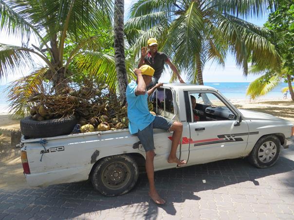 Con la mercancía en busca de otras palmeras