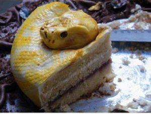 serpiente-comida-2
