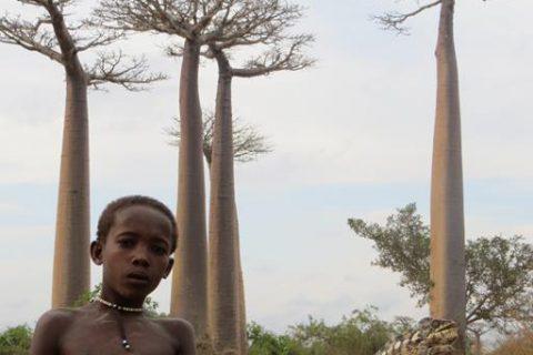 Madagascar/Avenida de los Baobabs