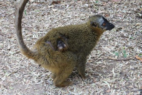 Madagascar/Parque Nacional de Isalo
