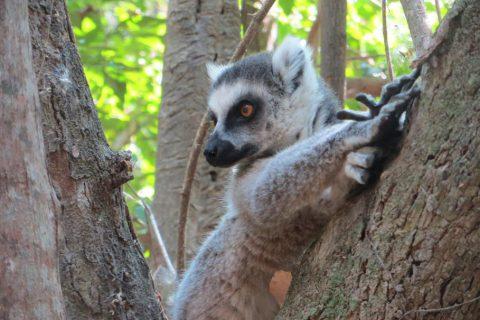 Madagascar/Reservas de Anja y Ranomafana