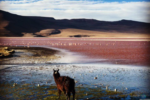 BOLIVIA / Tupiza / Reserva Eduardo Avaroa / Uyuni / Potosí / Sucre / La Paz – América del Sur